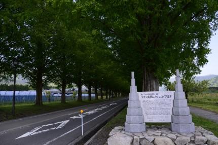 メタセコイヤ並木の石碑