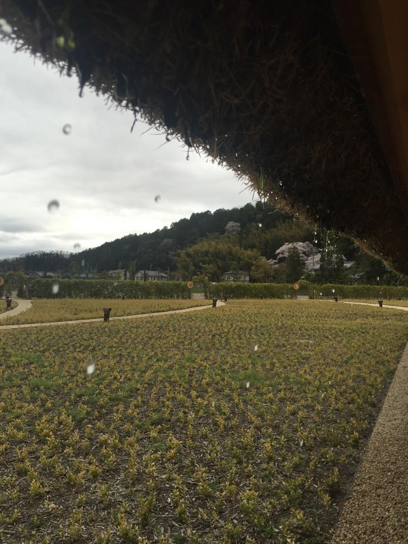 雨上がり 芝生の屋根から水敵