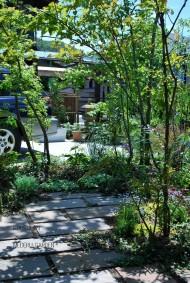雑木ガーデン野洲 5月